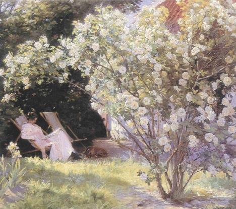 """Hva kan vel gi en større lykkefølelse enn å sitte under en rosebusk og lese den boken du alltid har hatt lyst til å lese, men aldri har tatt deg tid til? Slik som her fra; P. S. Krøyers """"Rosebusken"""""""