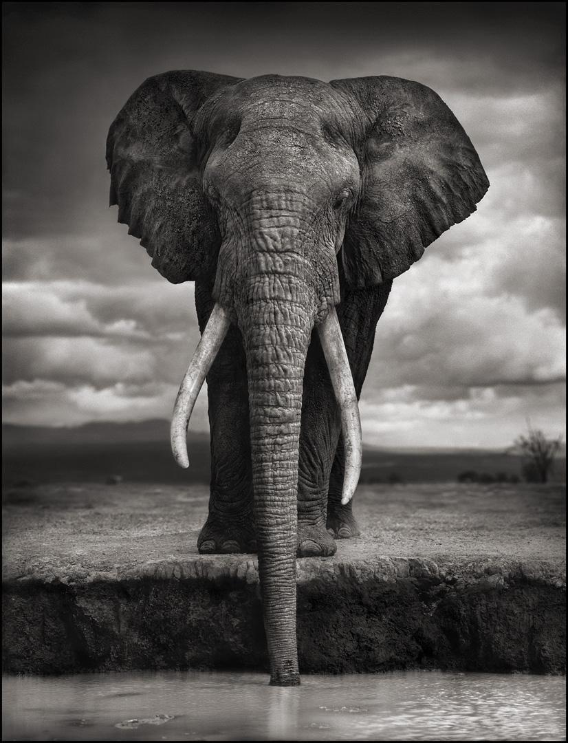 Nick Brandt, � Nick Brandt, Elephant Drinking, Amboseli, 2007 ,