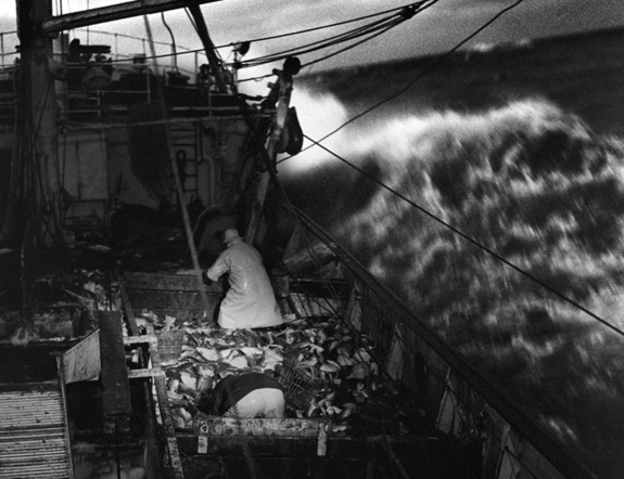 K�re Kivij�rvi , Fra de store banke 1959/1960. P� fiskertr�leren Gargia, Svalbardbanken,